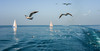 journey with seagulls on sea.. (adnangler) Tags: light sea sky seagulls reflection sailboat speed turkey photography freedom boat flickr waves outdoor fast istanbul shooting marmarasea jurney nikond800 flickrturkey fastshooting nikonturkey