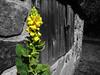 P1000618.edit1 (tcelli) Tags: blackandwhite bw texture window architecture contrast shutter coloraccent panasoniczs3