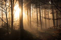 natures silhouettes (Andreas.Art) Tags: morning winter light nature leaves yellow misty forest sunrise landscape bayern bavaria foggy kelheim niederbayern weltenburg