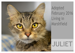 Juliet-Adopted (Ali Crehan) Tags: cat february shelter adopted 2016