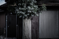 grafica_jp_flickr-1389 (grafica.tokyo) Tags: leica japan panasonic saitama summilux tokorozawa 15mm f17 gm5