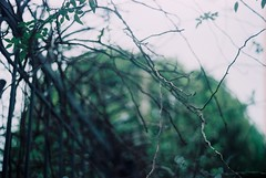 Hanoi. (Castorie) Tags: light tree verde green film canon garden leaf nikon afternoon fuji minolta pentax cloudy kodak bokeh vietnam jardim fujifilm filme hanoi grainisgood fujica praktica tarde helios tardy filmphotography filmisnotdead filmisalive filmisbetter