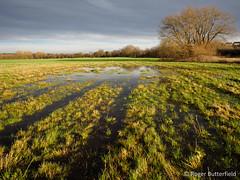 Swaithe Flood Meadows LWS (Roger B.) Tags: unitedkingdom barnsley southyorkshire gbr lws floodplain localwildlifesite seasonalinundation swaithefloodmeadows