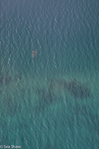 Dugongs from the air