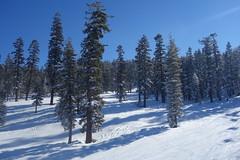 DSC09384 (tammyloh) Tags: travel snowboarding tahoe tamron northstar 2016