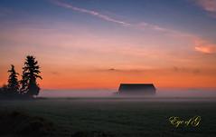 Sunrise, a Barn and Fog.jpg (Eye of G Photography) Tags: trees canada fog barn sunrise britishcolumbia fraserriver ladner sunsetsunrise canoereachtrail reifelislandwaterfowlscantuary