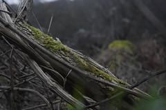 Sticks and Moss (_emmabird) Tags: green woodland outside moss sticks walk