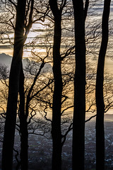 Tree Silhouettes - Cleeve Hill, Gloucestershire. (Jeremiah Huxley Productions) Tags: england gloucestershire cheltenham cleevehill