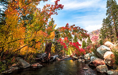 Sony A7RII Bishop California Fine Art Autumn Landscapes! Dr. Elliot McGucken Fine Art Landscape Photography! (45SURF Hero's Odyssey Mythology Landscapes & Godde) Tags: california autumn art nature landscape photography landscapes dr sony fineart fine elliot bishop a7 fineartphotography naturephotography sonnar wideanglelens naturephotos tfe mcgucken fineartphotos a7r fineartphotographer fineartnature sonya7 elliotmcgucken sonya7r elliotmcguckenphotography elliotmcguckenfineart sonya7rii a7rii a7r2 55mmf18zalens sonya7r2malibufineartlandscapessunsetssonya7riisony1635mmvariotessartfef4zaossemountlensdrelliotmcguckenfineartphotographywideangle sonya7r2 masterfineartphotography