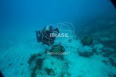 NE_Abrolhos0044 (Visit Brasil) Tags: horizontal brasil fauna natureza mergulho bahia esporte nordeste aventura externa abrolhos subaqutica comgente diurna