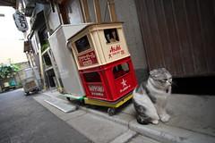 2016213 (Tokutomi Masaki) Tags: animal japan cat tokyo walk     yanaka  2016