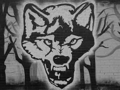 Auuuu (Sagittarius26) Tags: blackandwhite white inspiration black monochrome graffiti football wolf symbol outdoor walk sony saturday match fans spacer lech czarny pozna fanatics poznan wilk sobota biae kibice biay czarnobiae czarno pnoc kolejorz hx50 fyrtel patrioci sagittarius26 fanatycy kolejowi kolejorza