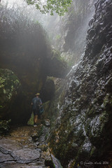 A damp walk at Springbrook (NettyA) Tags: cliff wet water track australia spray bushwalking qld queensland bushwalk springbrook goldcoasthinterland 2016 springbrooknationalpark scenicrim seqld warriecircuit bushwalker scbwc sonya7r