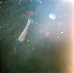 Camellia & light (Lore Stars) Tags: light tree film luz nature girl lomo lomography analgica lightleak rbol flare camelia camellia dianamini corp99