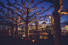 Trees and the City (c-u-b) Tags: trees skyline night germany nacht frankfurt streetphotography nighttime bäume frankfurtammain blauestunde mainufer platanen