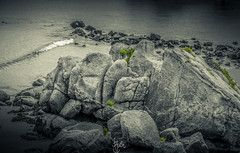 Green Spot (Rohit KC Photography) Tags: sea white seascape black green beach water grass rock canon landscape monterey seaside moss sand waves edited wave sealife canon24105mmf4l canon5dmarkii