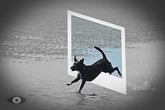 Socke am Strand (andreas.gisselmann) Tags: tiere meer hund haustier hunde schwaz bounds weis