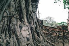 unseen thailand เศียรพระในต้นไม้