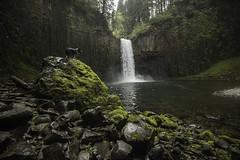 Abiqua Falls (Justin Knott) Tags: dog oregon landscape nikon 24mm d800 rokinon