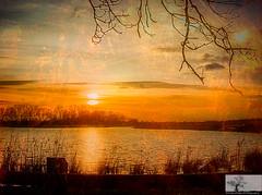 Quiet Pool (Rob Felton) Tags: sunset sky sun reflection tree silhouette bedford sundown scenic bedfordshire felton treeline goldenhour cople dogfarm robertfelton gravelworkings bedfordrivervalleypark