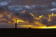sunset delight (Indigo Skies Photography) Tags: pink blue autumn trees light sunset red sky orange sun white color tree green nature yellow clouds rural landscape outside day farm