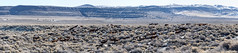 Mono Lake-10.jpg (gaillard.galopere) Tags: voyage california travel horse usa lake stone unitedstates salt roadtrip explore monolake sel tufa herd californie wildhorse 2016 decouverte alcalin