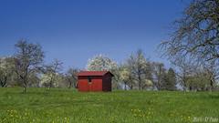 Red garden shed in spring (KF-Photo) Tags: spring htte gras 169 frhling tbingen gartenhaus holzhtte obstbume apfelbume pfrondorf