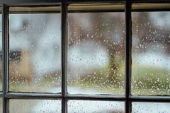 Project 365: Day 271 (Halley Alexa) Tags: winter cold window wet water rain project drops spring sill haiku frame 365 windowlight writings ahaikuaday