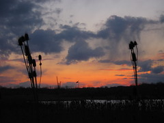 IMG_2135 (sjj62) Tags: sunset sky clouds lith s90 lakeinthehillsil