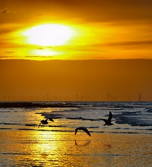 Taking flight (Graham  Sodhachin) Tags: sunset sea birds wildlife gulls margate