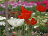 IMG_1164_C (from_the_sky) Tags: garden center strümpfelbach