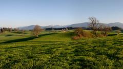 Frhling im Voralpenland (Alexander Burkhardt) Tags: gras grn alpen landschaft frhling hgel