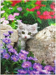 Peek a Boo (Keith Kimberlin) (Leonisha) Tags: flowers cat kitten chat blumen puzzle katze jigsawpuzzle ktzchen