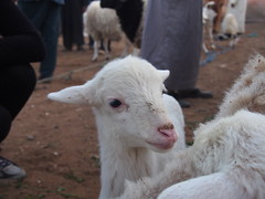 P4162032 (t_y_l) Tags: morocco marokko tinghir suq 2016 tinerhir