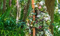 Earth Day 2016 (floridaplunge) Tags: life plants green orlando florida wildlife divine wdw waltdisneyworld animalkingdom earthday