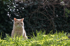 Happy Caturday    (Xena*best friend*) Tags: wood wild italy pet cats pets animal animals fur chats spring furry woods feline flickr outdoor tiger kitty kittens whiskers explore piemonte gato calico purr paws bp bradpitt gatto katzen pussycat markings feral wildanimals gingercats orangecats flickrexplore caturday piedmontitaly allrightsreserved happycaturday efs18135mm canoneos760d digitalrebelt6s