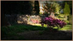 My RL Backyard (Sandi Benelli -Thanks A Million) Tags: sunlight nature backyard