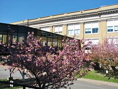 TREES IN BLOOM AT THE HIGH SCHOOL (richie 59) Tags: city school trees urban usa ny newyork tree america buildings constructionarea campus outside us spring unitedstates weekend sunday highschool midtown kingston newyorkstate constructionsite buildingsite nys nystate hudsonvalley kingstonny 2016 ulstercounty overheadwalkway schoolbuildings smallcity schoolcampus midhudsonvalley midhudson ulstercountyny 2010s kingstonhighschool richie59 midtownkingstonny midtownkingston april2016 april242016