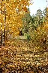 DSC_6027 (Rustam Bikbov) Tags: autumn september 2012    sverdlovskoblast