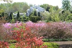 Ladew Manor House ~ from the Garden of Eden (karma (Karen)) Tags: gardens topiary azaleas blossoms maryland bushes monkton manorhouse ladewtopiarygardens 4spring nrhp harfordco