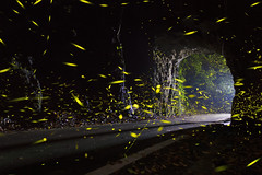 - (CHIEN_YU) Tags: canon landscapes taiwan 7d firefly