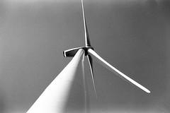Wind (tercrossman87) Tags: film home canon 28mm epson hp5 vivitar development ilford 119 ftb v550 lc29 ilfotec