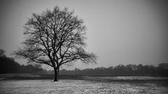 Einsamer Baum (digital_underground) Tags: schnee bw snow tree monochrome zeiss germany deutschland abend blackwhite europa europe sony hamburg alpha baum stadtpark blackdiamond abends schwarzweis a6000