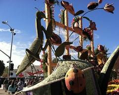 053 Ladybugs With Praying Mantis (saschmitz_earthlink_net) Tags: california ladybug pasadena roseparade float prayingmantis rotaryinternational 2016 tournamentofroses workingtogetherforpeace