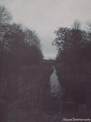 Trippy Stream (reynagailaniii) Tags: lake rural river landscape woods stream acid drugs trippy hallucinations pshychadellic