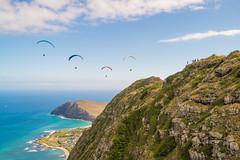 Andrew_Zoechbauer_FirstFlightMPUNewYear_DSC08685-Edit (azoech) Tags: hawaii paragliding makapuu