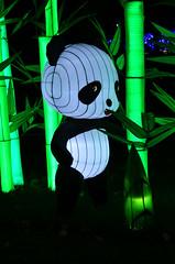 Cute Panda Lantern (pokoroto) Tags: autumn canada cute calgary october panda alberta lantern 10 2015     kannazuki   themonthwhentherearenogods 27