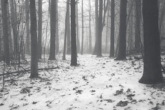 Amidst the forest (noahsfocus) Tags: blackandwhite bw fog forest foggy foggyforest noahbradow bradowphotography
