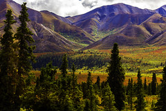 Alaska 0931 (nikonmike99) Tags: trees mountains nature alaska landscape colorful scenic hills denali denalinationalpark polychrome