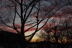 The Warm and The Blue (Cayena 5) Tags: new york blue winter sunset sky tree silhouette azul atardecer nikon branches cielo ramas d40